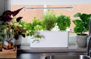 Nelson Garden uprawa hydroponiczna